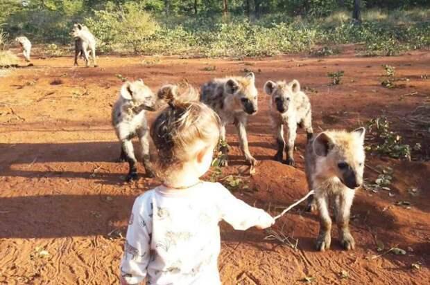 Настоящая Маугли: девочка Кики подружилась со стаей гиен
