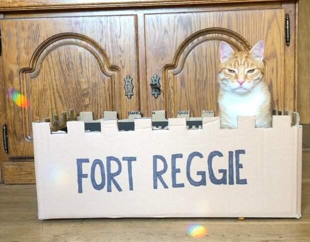 Крис, хозяин Реджи, решил, что нужно построить для кота мост. Да, можно было бы обойтись доской, но это же скучно в мире, животные, забота, история, кот, люди