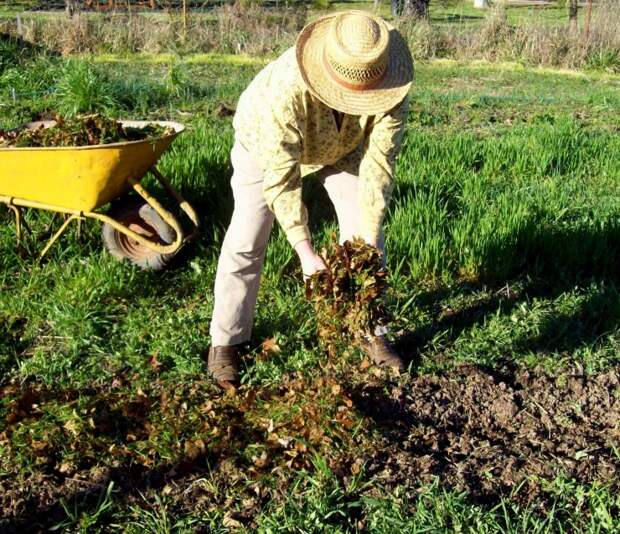 Вот что нужно внести в почву осенью, чтобы повысить ее плодородие