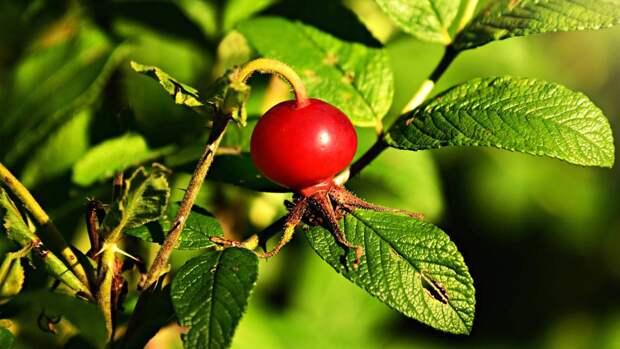 Иммунолог Слизова перечислила полезные продукты для укрепления иммунитета осенью