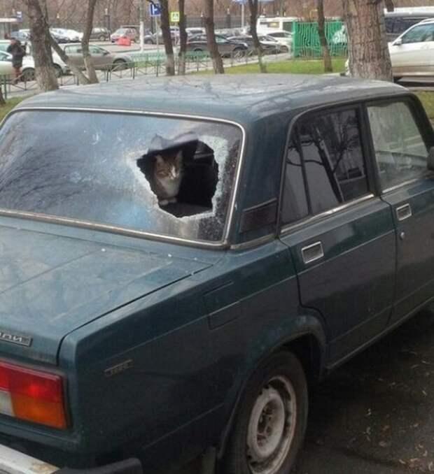 Эта машина моя кот, коты, опасный кот, прикол, суровый