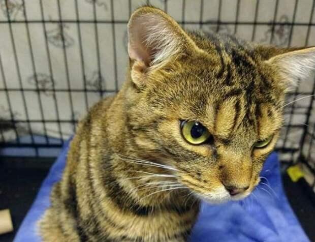 Бездомный кот пугал людей сердитой мордой, пока у него не появилась хозяйка