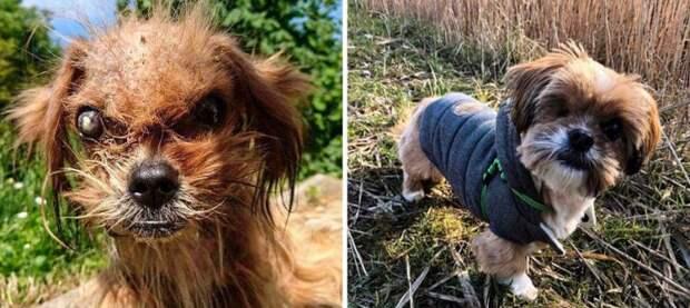 Несколько фотографий собак до и после приюта, которые тронут вас до глубины души