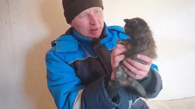 «Работать надо, а они котов спасают» - не всех пользователей соцсети умилил котенок