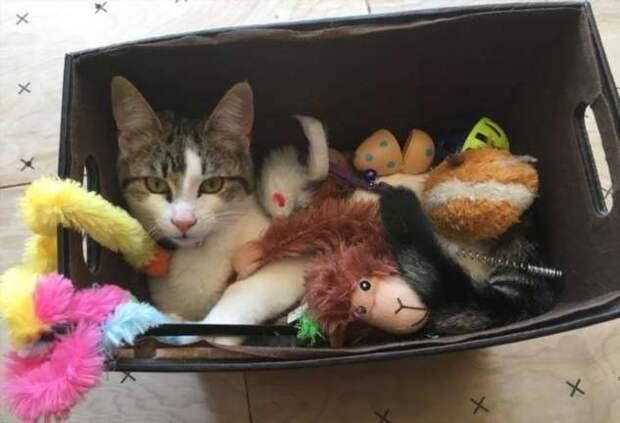 Подтверждение того, что кошки всегда гуляют, где хотят, и никто им не указ (22 фото)