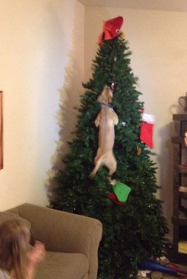 8. Пес просто пытается вытащить из елки кота животные, новый год, праздник к нам приходит, разрушительная сила, рождество, собаки и кошки, юмор