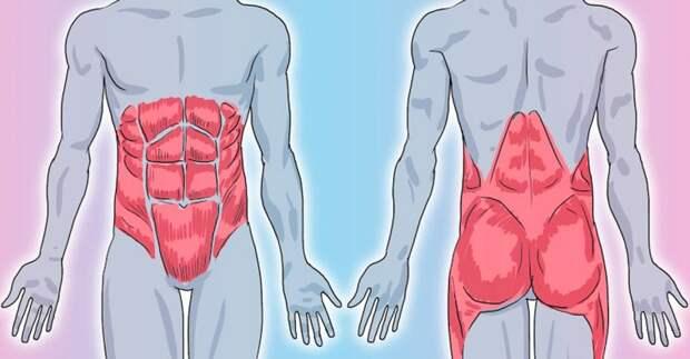 Укрепляем мышечный корсет: эффективные 5-минутные упражнения по Мюллеру