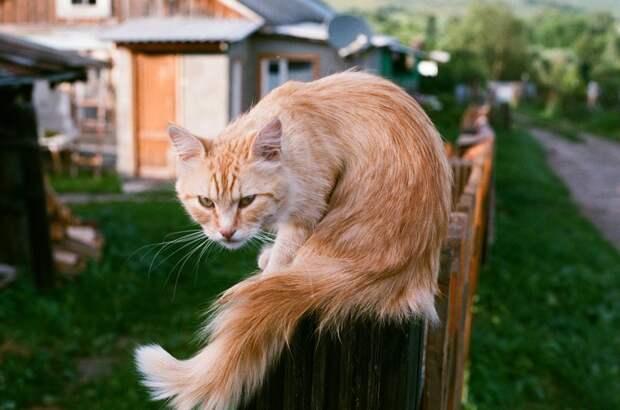 Очень колоритные уличные коты