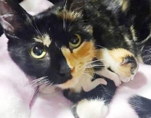 Бездомная мама-кошка была счастлива: из двух ее котят удалось спасти хотя бы одну малютку