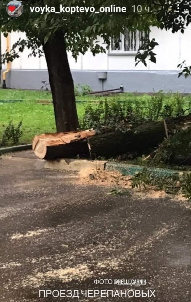 В проезде Черепановых обрушилось дерево