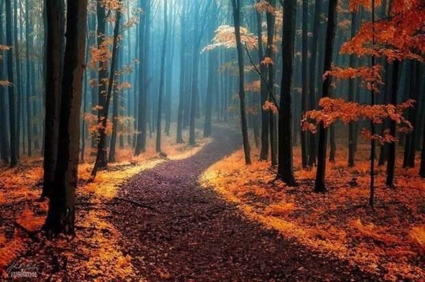 Магические тропы, ведущие прямо в сказку