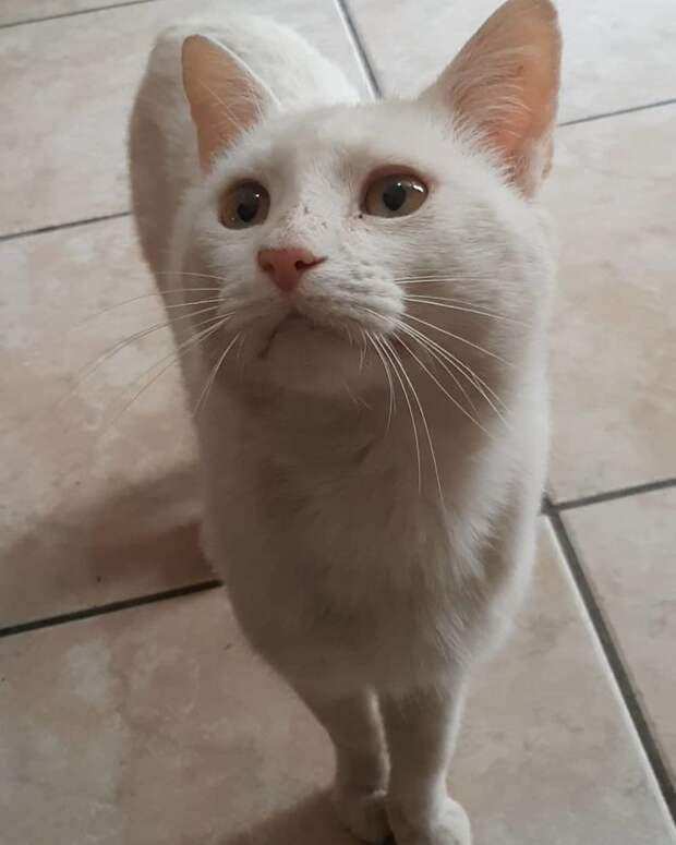Бездомный кот попросил девушку купить ему еды