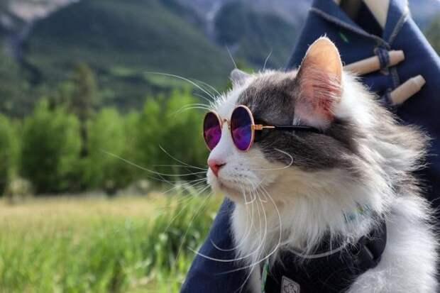 Канадский кот путешествует и ведёт свой Инстаграм