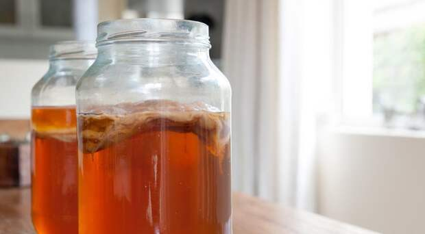 Живучие твари и где они обитают: вся правда о чайном, кефирном и тибетском грибах