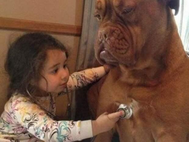 15 неопровержимых фактов о собаках, после которых вам захочется завести четырехлапого друга
