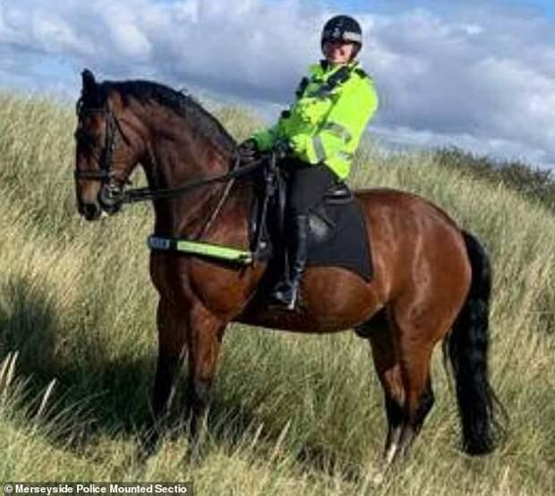 Конь-полицейский отказывается просыпаться без кружки чая с сахаром