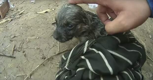 Вскоре после того, как щенок очнулся, рыболов-любитель обернул малыша в ткань и согрел Вьетнам, в мире, видео, животные, собака, спасение, утопление, щенок