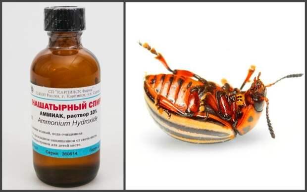 Нашатырный спирт против насекомых Нашатырный спирт, своими руками, сделай сам, факты