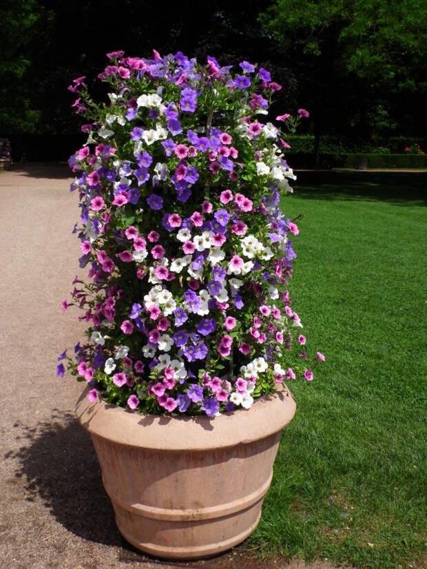 Великолепие петунии: пышная вертикальная клумба в сад