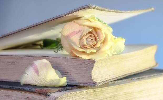 Роуз, Книги, Старая Книга, Цвести, Блум, Розенблат