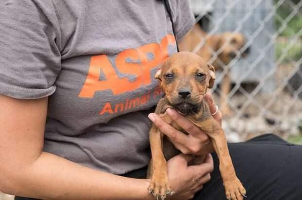 В Канзасе спасли 45 собак, в том числе щенков, которых заставляли драться до смерти