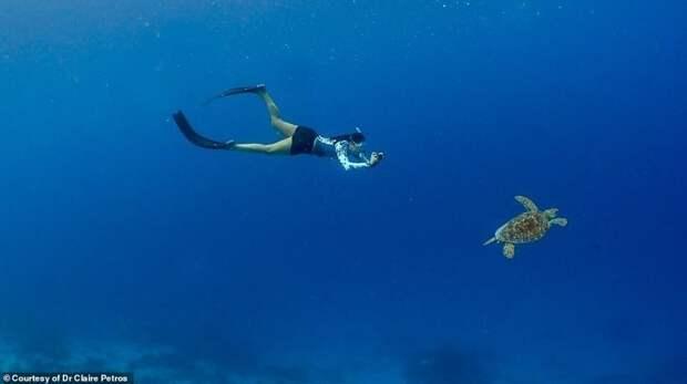 На Мальдивах обитают пять из семи известных видов морских черепах. Все они находятся под угрозой исчезновения или в списке уязвимых видов Мальдивы, ветеринар, реабилитация, сети, спасение животных, спасение черепахи, черепаха, черепахи