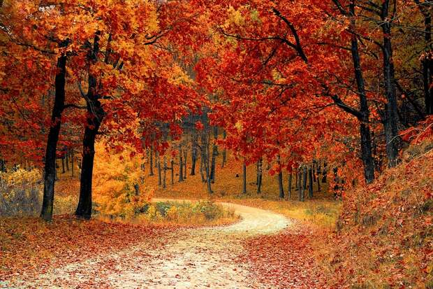 Осень/Фото: pixabay.com
