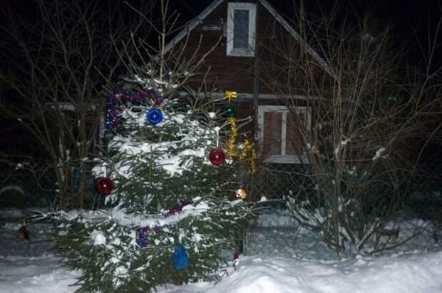 Ель рубить не нужно, а любоваться новогодними гирляндами и шарами могут не только владельцы участка, но и их соседи.