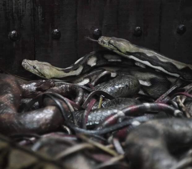 5 видов казней с использованием животных.