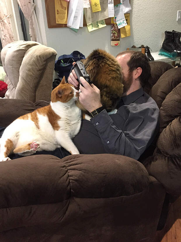 15 фото котов, чье поведение доводит хозяев до безумия