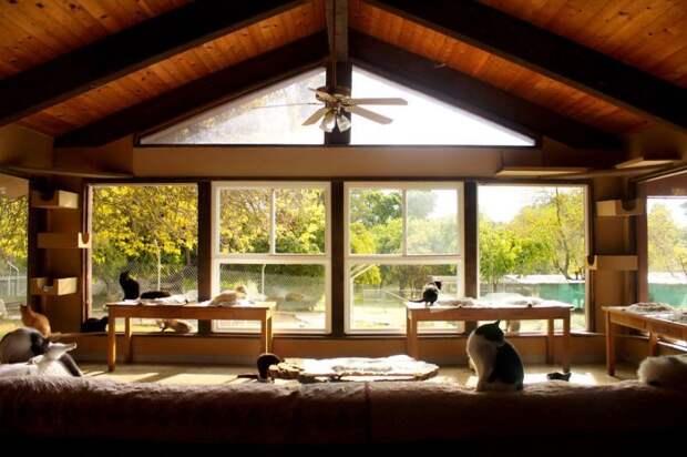 Кошкин дом в Калифорнии