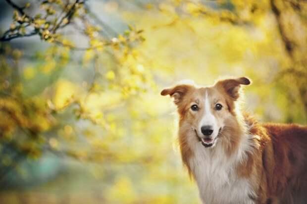2 июля всемирный день собак