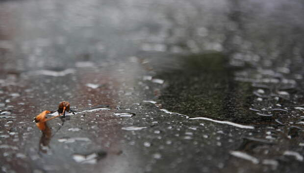До плюс 7 градусов и небольшой дождь ожидается в среду в Подольске