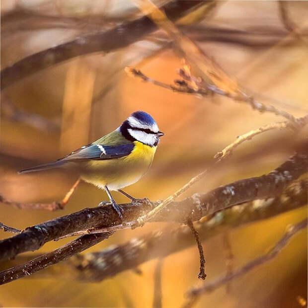 как выглядят птички Angry Birds в реальной жизни 15