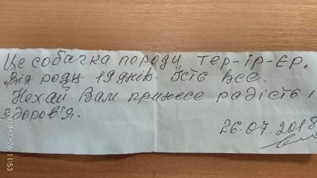 Щенок несуществующей породы был спрятан на лестнице. К нему прилагалось письмо!
