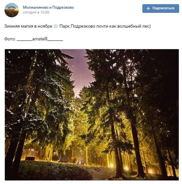 Фото дня: «волшебный лес» в Подрезкове