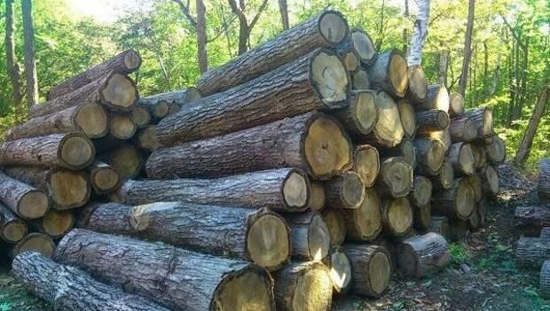 На Украине с начала года из-за спроса вдвое выросли цены на дрова