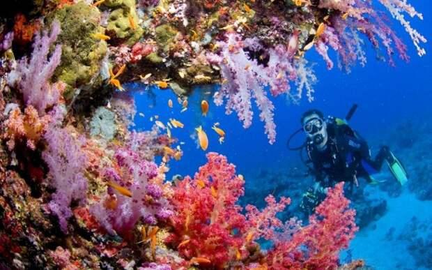 redsea10 10 фактов о Красном море