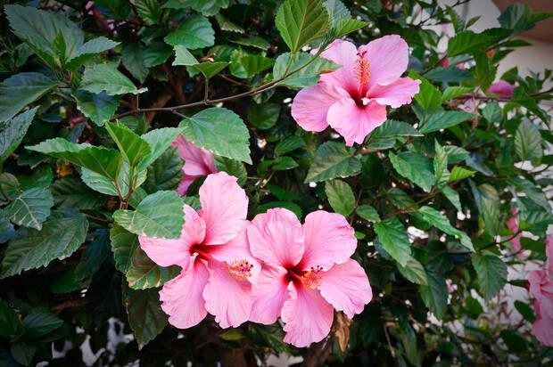 Злая красота: цветы, рядом с которыми ничего не растет