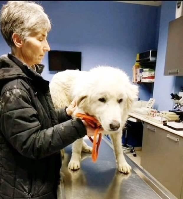 Раненый пес упал на дороге и закрыл глаза, он был не в силах больше идти