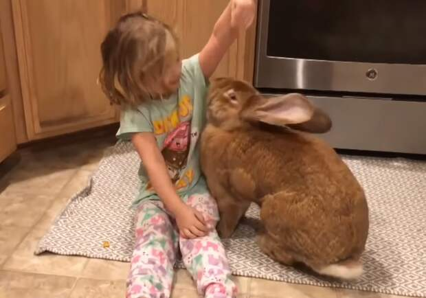 Американский кролик перерос хозяйку
