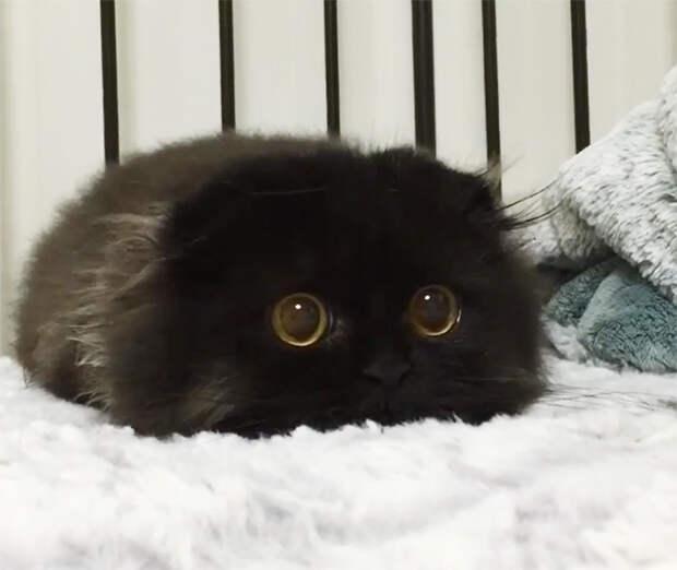 17 доказательств, что черные кошки — источник умиления, а не неудачи!
