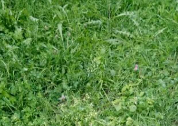 На Ферганской вырастили роскошный газон