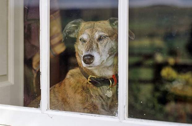 Как собака узнаёт, что хозяин скоро придёт домой