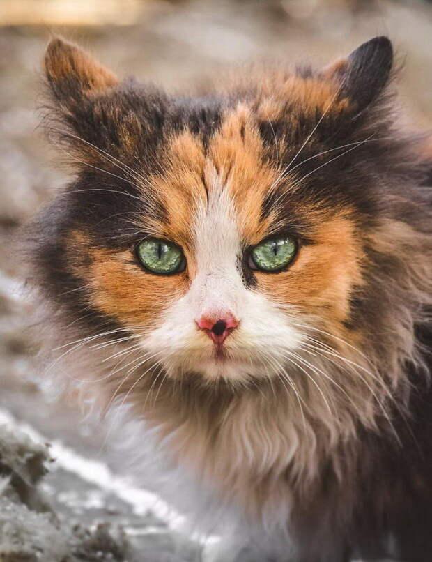Бездомные кошки в фотографиях Gabrielius Khiterer