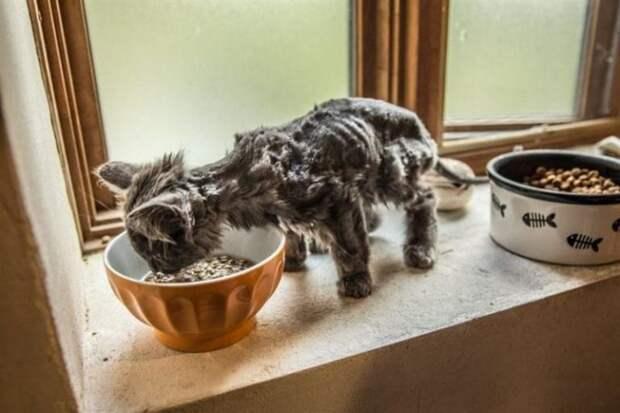 Как из тощего скелетика Барли превратился в роскошного кота