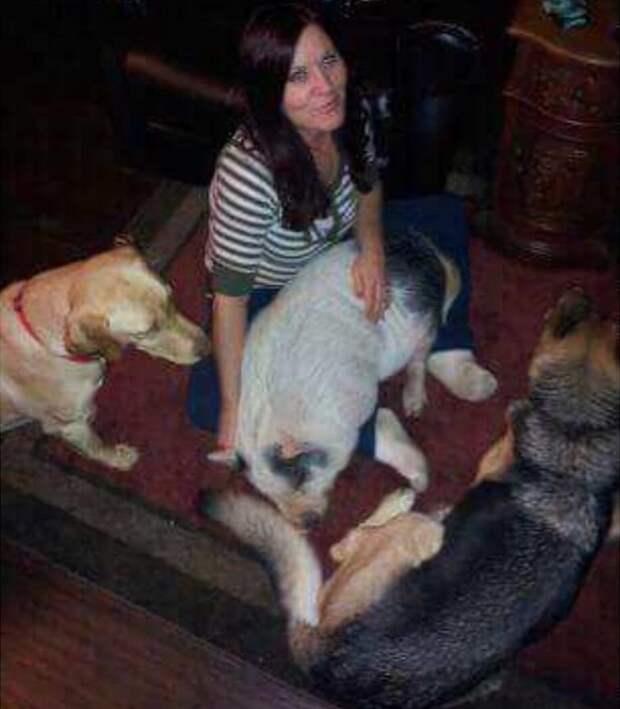 А вот Похлёбка вместе со своей хозяйкой. Лежит на ней словно собака Похлебка, домашний питомец, животные, милота, свинья, собаки