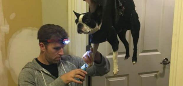 Гениальный лайфхак для собачников: как подстричь когти питомцу инебыть съеденным