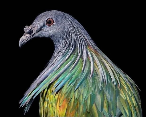 25 невероятно красивых портретов птиц