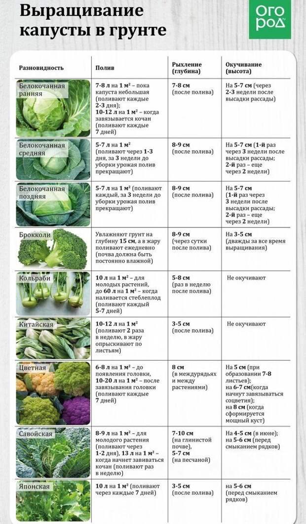 Таблица - выращивание